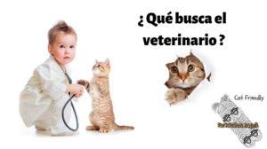 revision-veterinaria-felina