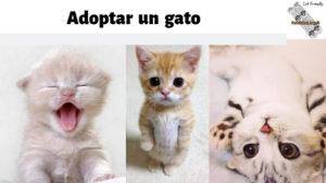 adoptar-gato