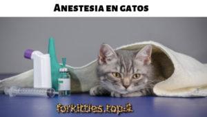 protocolo-sedacion-felina