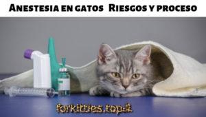 protocolo-anestesia-gatos