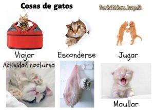 comportamiento-felino