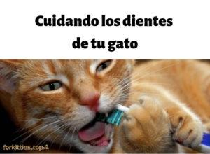 limpieza-dental-gingivitis-gato