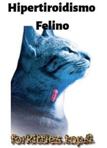 Hipertiroidismo-felino