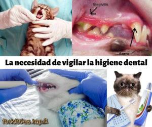 gingivitis-en-gatos