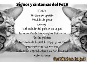 signos-sintomas-felv
