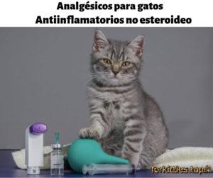 analgesicos-gatos