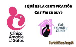 clinicas-amables-con-los-gatos