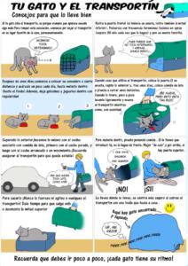 consejos-para-ir-veterinario-con-mi-gato