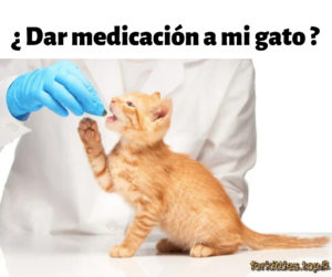 medicamento-tratamiento-gatos