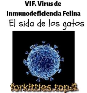 vif.virus-inmunodeficiencia-felina