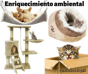 caja-carton-arbol-gatos