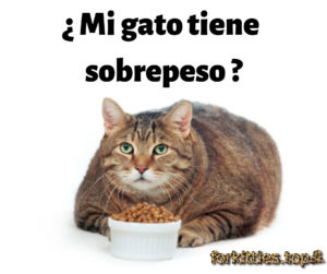 obesidad-gatos