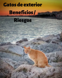 gato-vive-fuera-ventajas-versus-inconvenientes