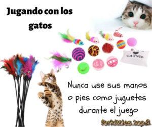 juguete-gato-consejos