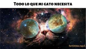 consejos-cat-friendly
