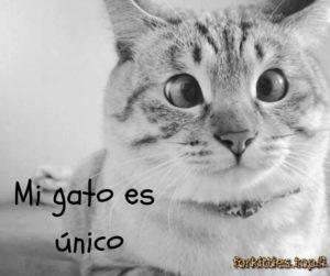 mi-gato-es-normal