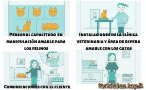clinicas-amables-gatos