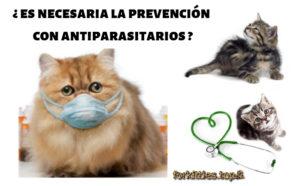 desparasitacion-felina