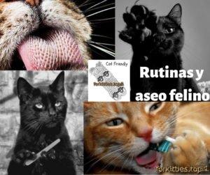 bolas-de-pelo-limpieza-dental-uñas-gato