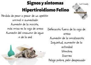 signos-y-sintomas-hipertiroidismo-felino