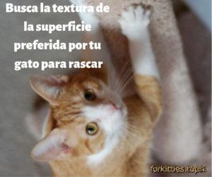 gato-uñas-rascador
