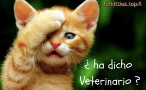 gato-feliz-veterinario